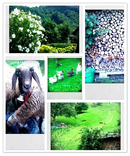 PhotoGrid_1344119401671